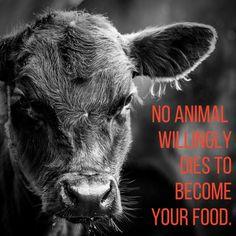 why finance animal cruelty - #vegan #crueltyfree