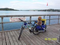 no diving #burley #bike #dog