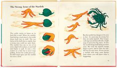 """""""Like a little factory making picture books"""": The wondrous work of Marie Neurath How To Study Physics, University Of Reading, House Illustration, Illustrations, Its Nice That, Information Graphics, Visual Communication, Screen Printing, Picture Books"""