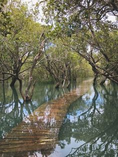 Mangrove swamp Paihia New Zealand [640853] Adventure Time Gunter, Life Is An Adventure, Adventure Travel, Adventure Kids, Forest Adventure, Funny Adventure Quotes, Best Weekend Trips, New Zealand Tattoo, Last Minute Travel