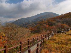 Wooden Path-Jirisan National Park-South Korea