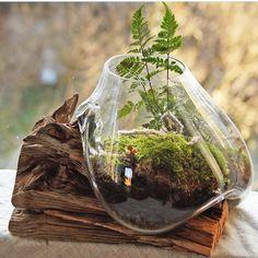 Indoor Gardens For Your Home Terrarium Plants, Succulent Terrarium, Mini Zen Garden, Indoor Garden, Air Plants, Indoor Plants, Inside Garden, Mini Bonsai, Decoration Plante
