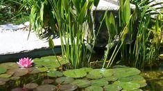 Kertépítés ötletek Modern Garden Design, Landscape Design, Garden Inspiration, Backyard Landscaping, Water, Plants, Houses, Gardening, Gardens