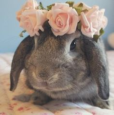 pinterest bunnies with crowns | 1000+ images about flower crown animals on Pinterest | Guinea pigs ...