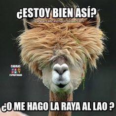 videoswatsapp.com imagenes chistosas videos graciosos memes risas gifs graciosos chistes divertidas humor gato tom http://chistegraficos.tumblr.com/post/170901165133/imagenes-de-risa #imageneschistes #videosderisa #videosgraciosos