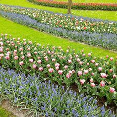 Fields of tulips - Kaukenhof Gardens #kaukenhof #tulip