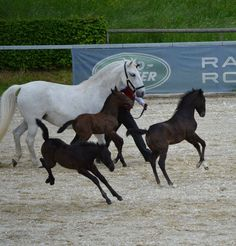 #Foals enjoying a bit of play time :) Out of the #HorseStalls and having fun in the #stable #HorseLovers #HorsePeople