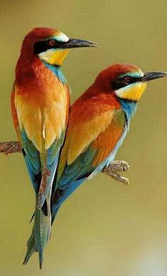 We have added most beautiful bird photos and bird photography tips for beginners. Bird photography is one of the most popular genres of nature and wildlife photography. Most Beautiful Birds, Pretty Birds, Love Birds, Birds 2, Humming Birds, Birds Of A Feather, Beautiful Pictures, Stunningly Beautiful, Amazing Photos
