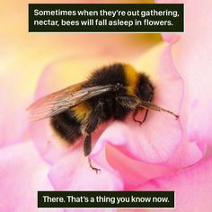 Here are some weird and wonderful nature facts that you can amaze your friends with. Weird Animal Facts, Animal Facts For Kids, Fun Facts About Animals, Wtf Fun Facts, Animal Fun, Random Facts, Nature Pictures, Animal Pictures, Bee Facts