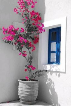 Pretty flowers by Ana Ramos