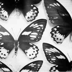Black and White Butterflies White Butterflies on black and vice versa