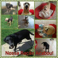 G.A.R.R.A. - Grupo de Ação, Resgate e Reabilitação Animal: Nossa ração acabou, precisamos da sua ajuda!