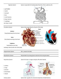 Science Foldable Templates | Foldable to study body systems