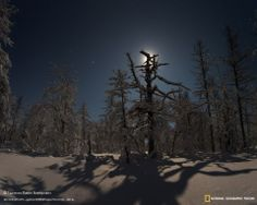 """""""Moon shadow"""". Full moon over the forest in a rare cloudless night far from Seoul.""""I'm being followed by a moon shadow..""""Author: Pavel Tkachenko, a member of Russia's """"wild nature photo contest-2014»~FPL♛"""