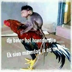 Afrikaanse Quotes, Goeie More, Monday Quotes, Good Morning Good Night, Funny Jokes, Best Friends, Positivity, Humor, Motivation