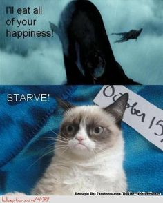 Harry potter grumpy cat