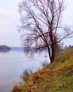 Not much of winter just before New Year the Neman river Kaunas Lithuania  #naturephotography #nature #travel  #travelblog #december #winter #winterphotography #valdastravel  #instawinter #instaphoto #neman #lithuania #weather #trees #grass #river #water #mist #tranquility  #calmness