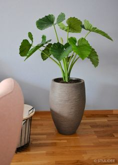 Having indoor plant decor may also give the impression that people who live in the house invest their time to take care of the plants, so that their place looks lively, natural, and fresh. Green Plants, Garden Inspiration, Plant Decor Indoor, Colorful Plants, Garden Living, Large Plants, Houseplants Decor, Simple Lighting, Beautiful Decor