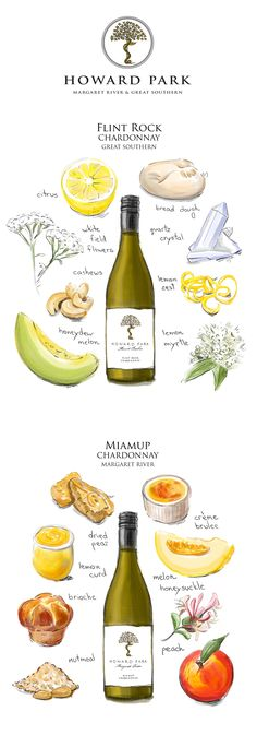 When describing wine, winemakers pick out characteristics like a perfume note. A food reference is used to convey to people how that wine will actually taste. These watercolor drawings help to illustrate the different wine profiles. Design by M. m. | #watercolor #wine #flavor #winetasting #whitewine Lemon Meringue Pie, Lemon Curd, Watercolor Design, Watercolor Illustration, Wine Flavors, Wine Tasting Notes, Different Wines, Creme Brulee, Wine Recipes