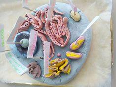 COSTRUZIONE DELLA CELLULA - ppt video online scaricare Cellulite, Video, Cookies, Montessori, Desserts, Science, Crack Crackers, Tailgate Desserts, Deserts