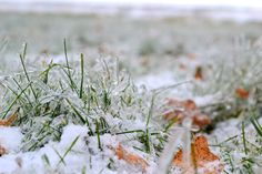 Thought the grass looked really cool after an icestorm a few months back..  #winter #icestorm #photography