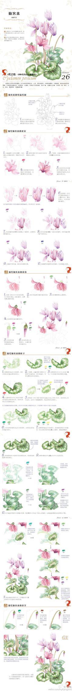"""【绘画教程】#每日涂鸦#""""花之绘""""--美丽仙客来植物绘详细手绘过程噢!!(点大图看啦~)"""