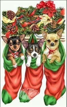 Chihuahuas Christmas Animals, Christmas Dog, Merry Christmas, Christmas Cards, Chihuahua Love, Chihuahua Puppies, Reindeer Chihuahua, Animals And Pets, Baby Animals