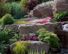 ROCKS WITH ALPINE PLANTS, MOUNTAIN TREES, GENTIANA & ASPLENIUM. THE ALPINE GARDEN SOCIETY'S 'MAGIC OF THE MOUNTAINS' DESIGNED BY M. UPWARD/R. MERCER.  clivenichols.com