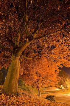 Falling into the night...autumn in Oregon.