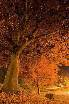 Falling into the night...autumn in Oregon.