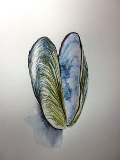 Mussel shell original watercolour pencil drawing by Anne Lawson. Inside the shell worked so well! $20