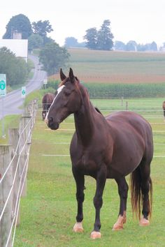 Horse, Lancaster County