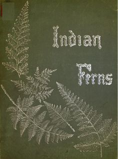 Album of Indian ferns : - Biodiversity Heritage Library