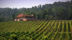 Enjoy a wine tasting or explore a wine trail in the Yadkin Valley, tour America's most-visited winery at Biltmore, or stay in a vineyard treehouse in Charlotte. Browse trip ideas and explore things to do at North Carolina's wineries and vineyards. Mountain Waterfall, Nc Mountains, Southern Heritage, North Carolina Homes, Carolina Beach, Island Beach, Travel And Tourism, Rafting, Day Trip
