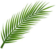 palm branch image free cliparts that you can download to you palms rh pinterest com palm tree leaf clip art palm tree leaf clip art
