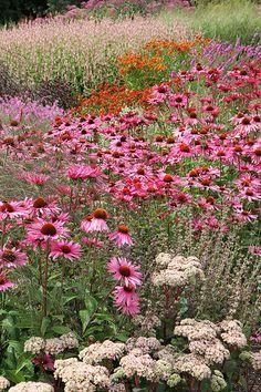 Pensthorpe, Norfolk | Piet Oudolf's millenium garden | Christopher Wren | Flickr