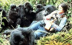 DIANA FOSSEY - A mulher da floresta que viveu muitos anos com gorilas para estudar o seu comportamento  individual, familiar, liderança, hábitos,etc.- Personalidades - Portal das Curiosidades