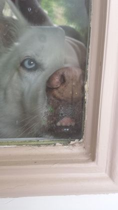 I was having a horrible day until I came home to this face in the window