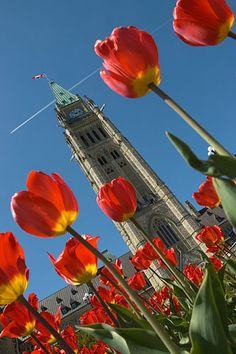 Parliament Hill Tulip Festival - Ottawa, Canada