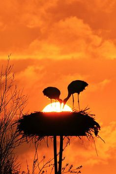 stork nest in the sunset. Photo by Tamás Rajna via 500 px Beautiful Sunset, Beautiful Birds, Beautiful World, Beautiful Pictures, Sunset Love, Simply Beautiful, Vintage Illustration, Tier Fotos, Sunset Beach