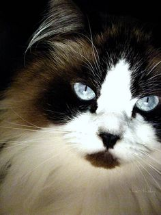 Gorgeous cat!