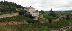 Installé sur les hauteurs de Nuits-Saint-Georges le vignoble du Château Gris propriété de la maison Lupé-Cholet est le seul clos planté en terrasse de Bourgogne. Le site du Château Gris offre une vue saisissante sur la constitution du vignoble bourguignon et sa mosaïque de terroirs. Au bas de la route on distingue la maison Lupé-Cholet et le Clos de Lupé classé en appellation bourgogne. Plus haut le vignoble en terrasse si particulier du Château Gris avec ses 2hectares 80 de premier cru…