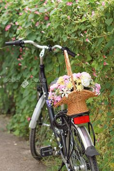 Basket on a bike