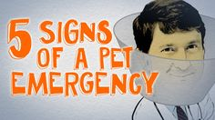 5 signs your dog or cat is having an emergency - Respiratory & Digestive edition on Cone of Shame