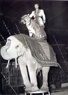 Gunther Gebel-Williams with his tiger Bengali, and his African elephant Kongo, at the Spanischer National Circus (Circus Williams), c.1965