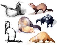 Com on otter cartoon, ferrets care, cute Ferrets Care, Cute Ferrets, Animal Sketches, Animal Drawings, Art Sketches, Otter Cartoon, Ferret Tattoo, Animals And Pets, Cute Animals