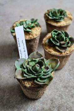 succulent cupcakes tutorial - Wow!