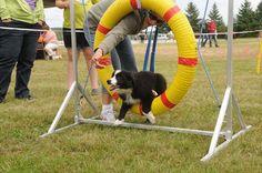 Dog Days at Laird Fair