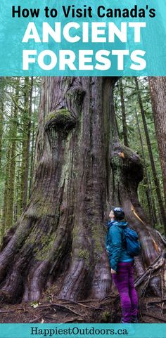 Admiring an old growth tree in Lower Avatar Grove. Visit Big Lonely Doug, Avatar Grove and the other big trees near Port Renfrew, British Columbia. Alberta Canada, Quebec, Visit Canada, Canada Eh, Canadian Travel, Canadian Food, Vancouver Island, Outdoor Travel, Cool Places To Visit