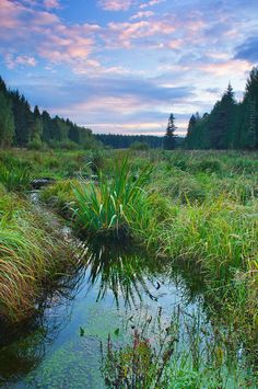 Losiny Ostrov national park, Russia.